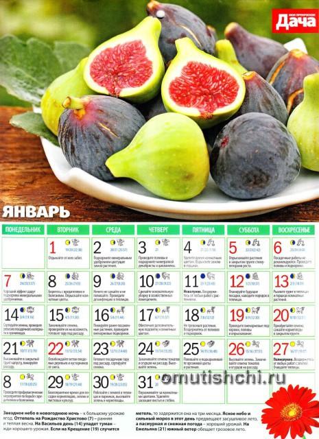 Лунный календарь 2013 года посевной - Январь