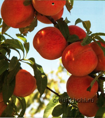 Лунный календарь садовода на 2014 год